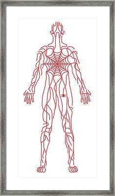 Anatomy Of Human Body And Spider Web Framed Print