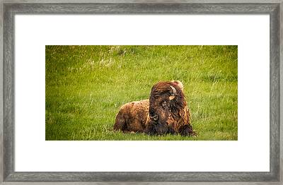 Framed Print featuring the photograph Ancient Bison by Rikk Flohr