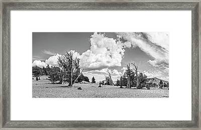 Ancient Bristlecone Pine Forest Panorama Framed Print by Jamie Pham