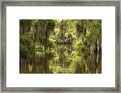 Ancient Cypress Framed Print