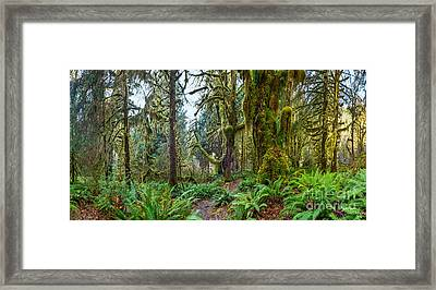 Ancient Forest Panorama Framed Print