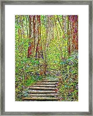 Ancient Forest Path - Tamalpais California Framed Print