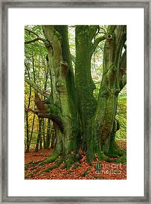 Ancient German Oak Trees In Sababurg Framed Print by Heiko Koehrer-Wagner