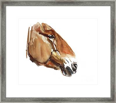 Ancient Head  Przewalski Framed Print by Mark Adlington