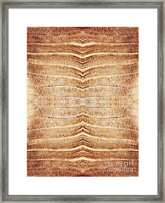 Ancient Lines 5 Framed Print by Sarah Loft