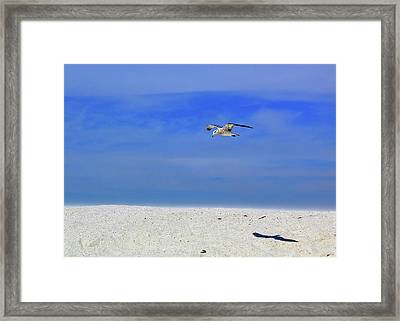 Framed Print featuring the photograph Ancient Mariner by Marie Hicks
