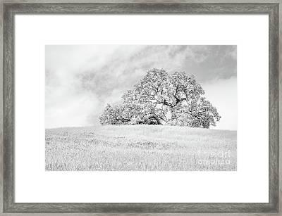 Ancient Oak Framed Print