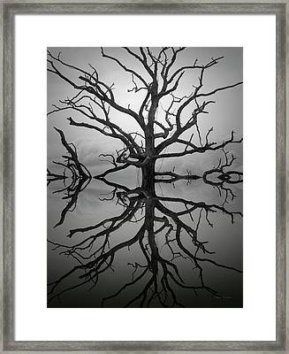 Ancient Oak Tree Montage Framed Print