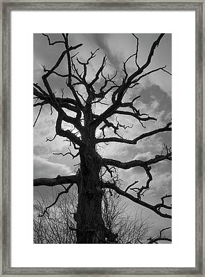 Ancient Oak Tree No. 4 Framed Print