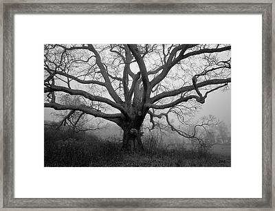 Ancient Oak Tree V - Sheep Pasture Framed Print