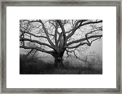 Ancient Oak Tree V - Sheep Pasture Framed Print