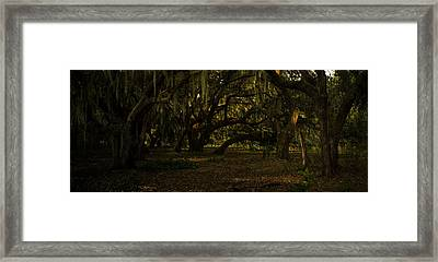 Ancient Oaks And Spanish Moss Framed Print by Robert Swinson