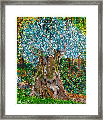 Ancient Olive Tree Framed Print by Valerie Ornstein