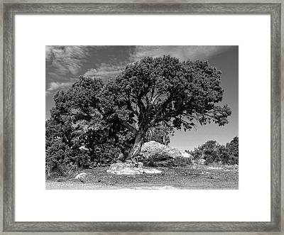 Ancient One Framed Print