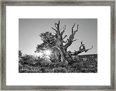 Ancient One Framed Print by Jamie Pham