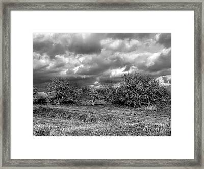Ancient Orchard Framed Print