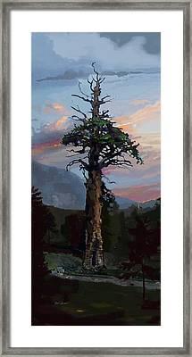 Ancient Pine Framed Print