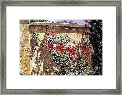 Ancient Roses Framed Print by David Lloyd Glover