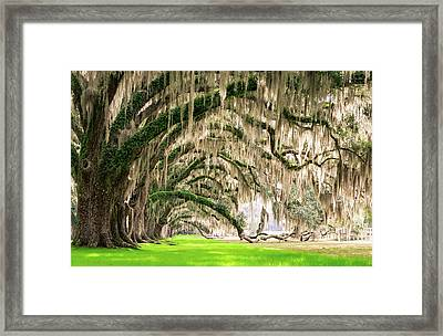 Ancient Southern Oaks Framed Print by Serge Skiba