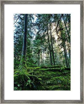 Ancient Spirits Framed Print by Connie Handscomb