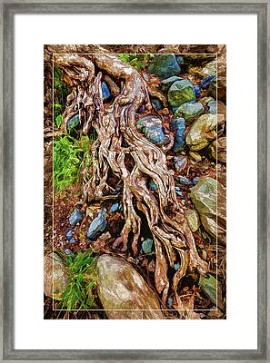 Framed Print featuring the photograph Ancient Sycamore Roots by ABeautifulSky Photography