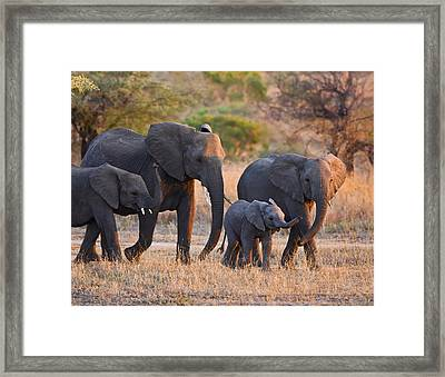 Ancient Tradition Framed Print by Basie Van Zyl