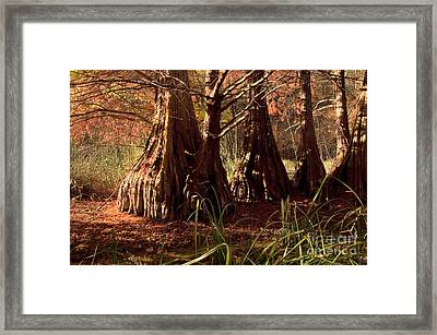 Framed Print featuring the photograph Ancient Tree At Lake Murray by Tamyra Ayles