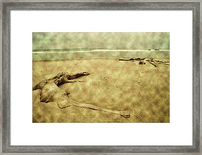 Ancient Tree Roots Framed Print by Bonnie Bruno