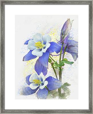Ancolie Framed Print