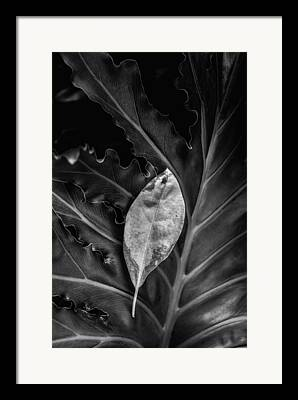Botony Framed Prints