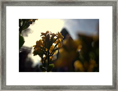 And It Was Called Yellow. Framed Print by Guilherme Santos