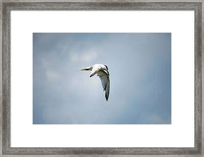 And Still The World Terns Framed Print
