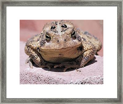 And The Ant Said Framed Print
