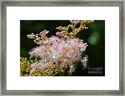 And Then She Decided To Dance With Her Soul Framed Print