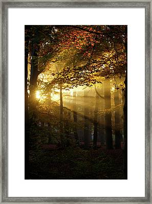 And Then There Was Light - Autumn Forest Framed Print
