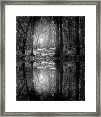 And There Is Light In This Dark Forest Framed Print by Tara Turner