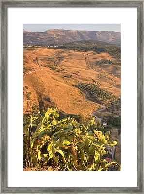Framed Print featuring the photograph Andalucian Golden Valley by Ian Middleton