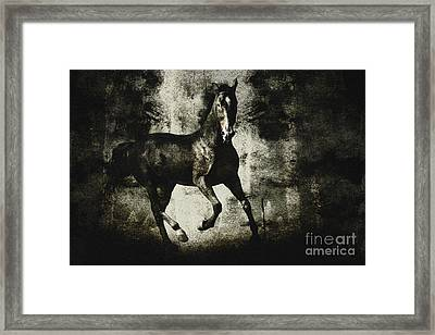 Andalusian Horse Framed Print