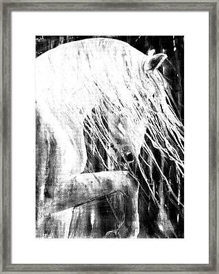 Andalusian Stallion Black And White Framed Print