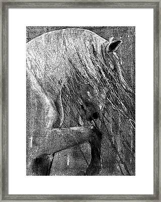 Andalusian Stallion Black And White Stippled Framed Print