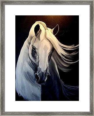 Andalusian Stallion Framed Print by Glenda Smith