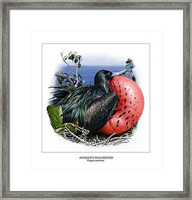 Andrews Frigatebird Fregata Andrewsi 3 Framed Print by Owen Bell