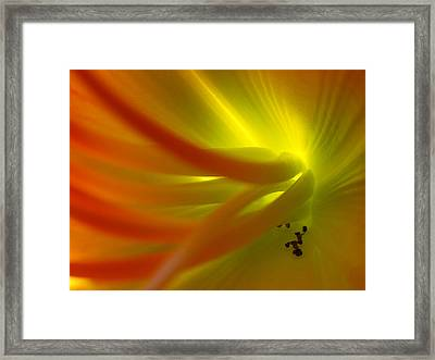 Android Green Framed Print by Juergen Roth