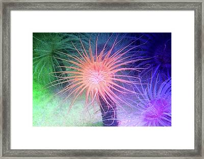 Framed Print featuring the photograph Anemone Color by Anthony Jones