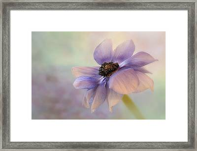 Anemone Flower Framed Print