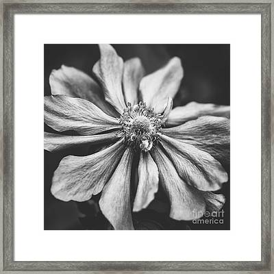 Anemone Flower Photographic Art In Black And White Framed Print by Natalie Kinnear