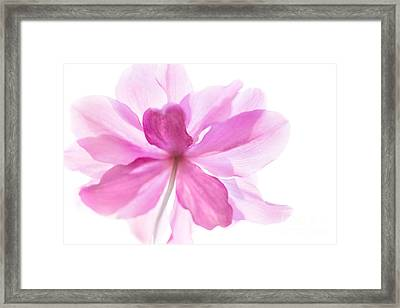 Anemone Flower - Soft And Gentle - Natalie Kinnear Photography Framed Print by Natalie Kinnear