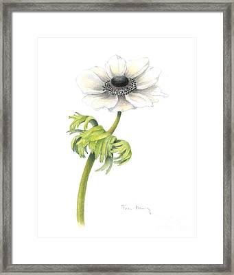 Anemone Framed Print by Fran Henig