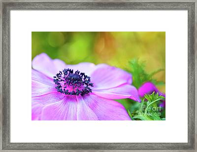 Anemone Pink Framed Print by Tim Gainey