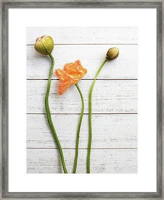 Anemone Pods Framed Print